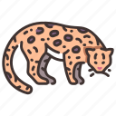 animal, wildlife, wild, jungle, forest, ocelot, cat icon