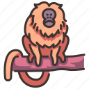 animal, lion, monkey, tamarin, wild, wildlife, zoo icon