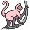animal, jungle, monkey, spider, wildlife, zoo icon