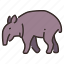 animal, wild, wildlife, forest, nature, tapir, zoo