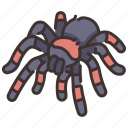 dangerous, insect, poison, spider, tarantula, wildlife icon