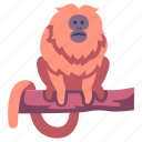 animal, jungle, lion, monkey, tamarin, wildlife, zoo icon