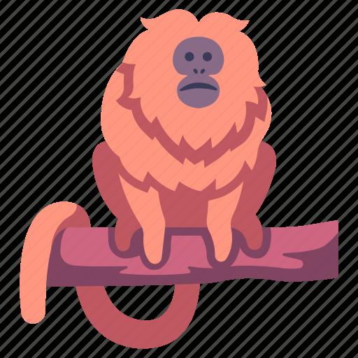Animal, jungle, lion, monkey, tamarin, wildlife, zoo icon - Download on Iconfinder