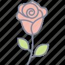 red, rose, valentine, love