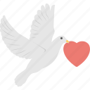 columbidae, love message, loving bird, loving dove, valentine icon