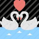 ducks in love, happy ducks, i love ducks, romantic ducks, swans love
