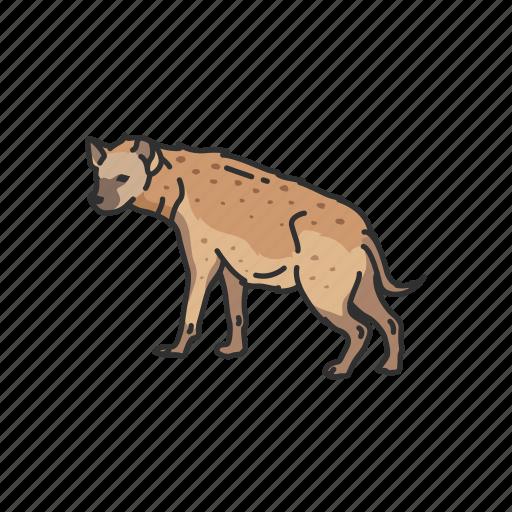aardwolf, animals, hyena, mammal, scavenger icon