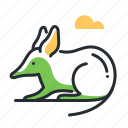 animal, australia, bandicoot, mammal