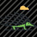 animal, australia, echidna, mammal