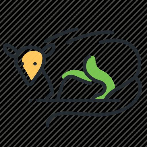 Animal, mammal, opossum, wildlife icon - Download on Iconfinder