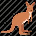 australia, herbivore, kangaroo, wild, wallaby, skippy