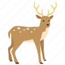 christmas, deer, hunting, reindeer, rudolph, stag, venison icon