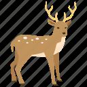 christmas, deer, hunting, reindeer, rudolph, stag, venison