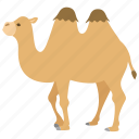bactrian, camel, circus, humps, ride, riding, tour icon