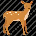 deer, doe, fawn, hunting, reindeer, venison, wild