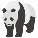 bear, china, chinese, endangered, environment, giant, panda icon