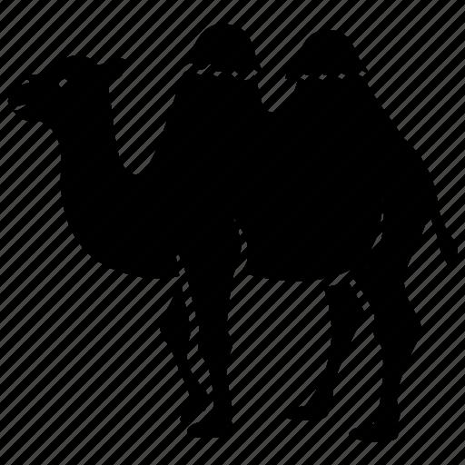 bactrian, camel, circus, humps, ride, riding, tour icon