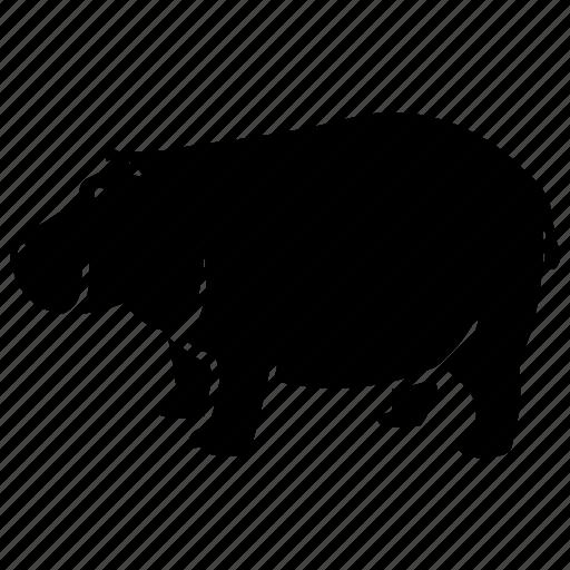 africa, hippo, hippopotamus, mammal, wild, zoo icon