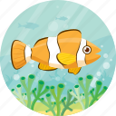 animal, clown, fish, ocean, pet icon