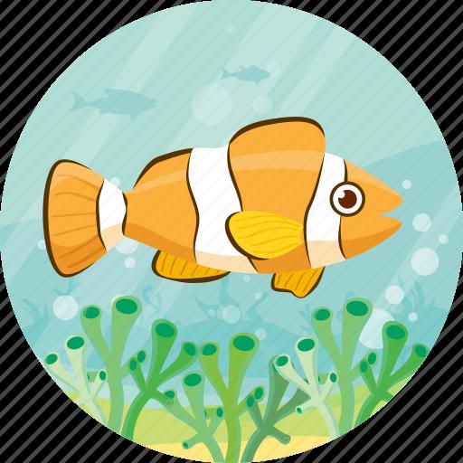 Pet, fish, animal, clown, ocean icon