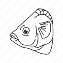 animal, fish, fish head, fish meat, food, meat, meat cuts icon