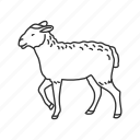 animal, food, lamb, meat, mutton, sheep, whole lamb icon
