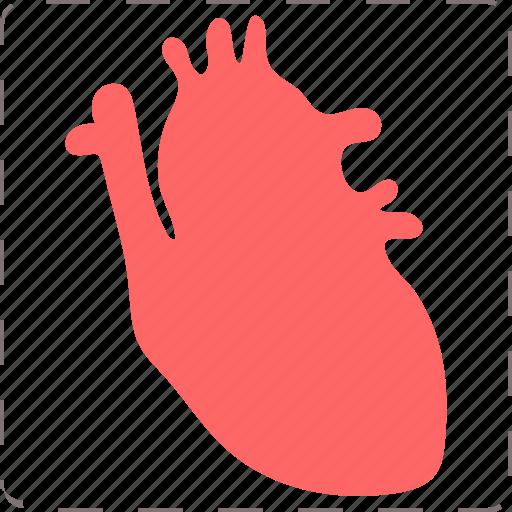 anatomy, health, heart, organ icon