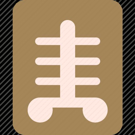 bones, health, medical, xray icon