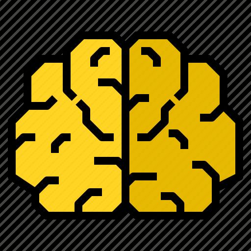 anatomy, brain, creative, human, science icon