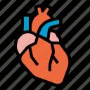 heart, anatomy, organs, body, medical