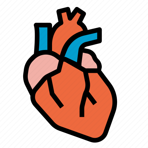 Heart, anatomy, organs, body, medical icon - Download on Iconfinder