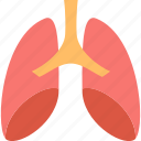 pulmonology, health, hospital, lungs, medicine, respiratory, treatment