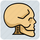 bones, head, medical, skeleton, skull icon