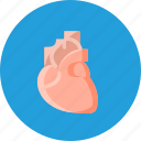breath, cardiology, heart, life, medical, organ icon