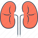 disease, kidneys, organ, transplant icon