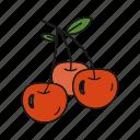 cherries, cherry, fruit