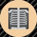 medical, ray, x, analyzes, skeleton