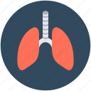 anatomy, breathe, human lungs, lungs, pulmonology