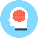 brain anatomy, creative mind, human brain, human head, thinking icon