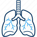 human, kidney, organ icon