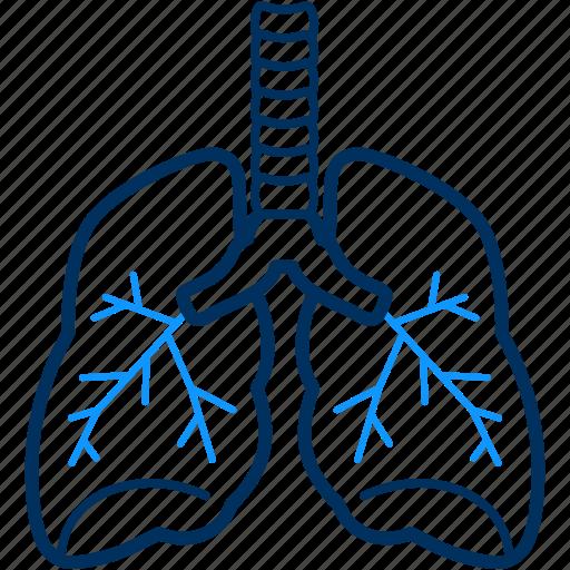 human, kidney, organ icon