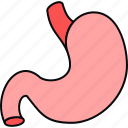 anatomy, body, medical, organ, part, stomach icon
