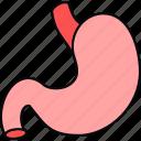 stomach, anatomy, body, medical, organ, part