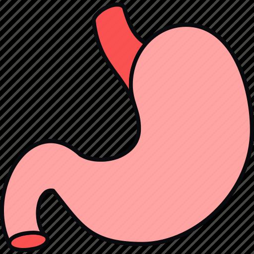anatomy, body, medical, organ, part, stomach icon