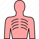 bones, human, anatomy, bodypart, lungs icon