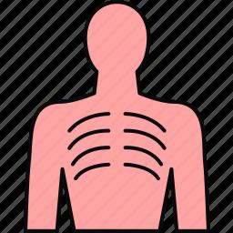 anatomy, bodypart, bones, human, lungs icon