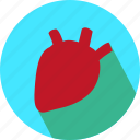 heart, kidney, medical icon
