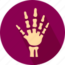 bones in hand, hand bones, medical, medical hand icon