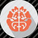 medical, organs icon
