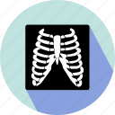 body bones, body structure icon
